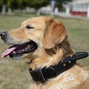 金属製装飾付き 犬用首輪