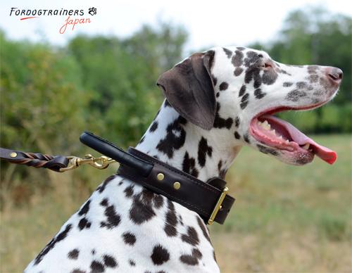 二枚の革で作られた犬の首輪