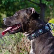 大型犬のボール 犬のストレス解消と遊びに最適!径は15cm