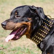 装飾された革製犬用ハーネス(胴輪)