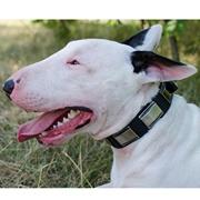 大型犬の訓練用ラバーリード 緑 180cm