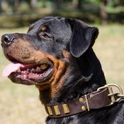 オーバルコンチョ付き革製犬用首輪