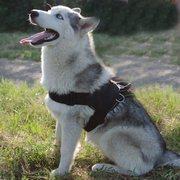 多目的で、快適なナイロン製犬用ハーネス