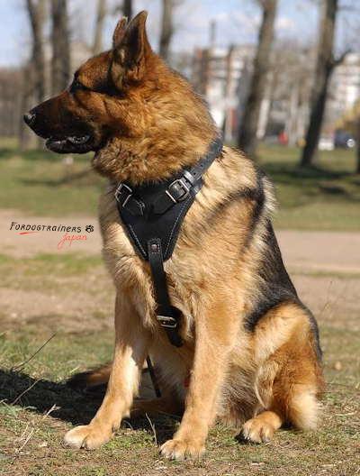 ジャーマン・シェパードに合う犬のハーネス