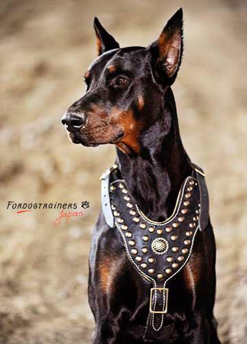 スタッズ付き本革犬のハーネス