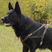 ニッケルスパイク付 本皮革製 犬用首輪