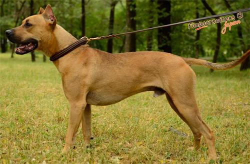 大型犬用レザーリード