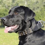 犬のトレーニング・散歩用ナイロンのハーネス