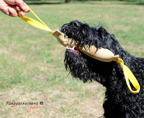 犬用革製トーイ