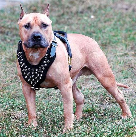 散歩・訓練・追跡向けの犬のハーネス