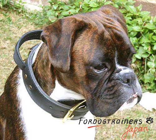 ハンドルが付いている犬訓練用首輪