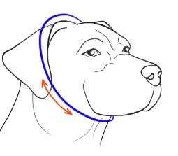choke collar size
