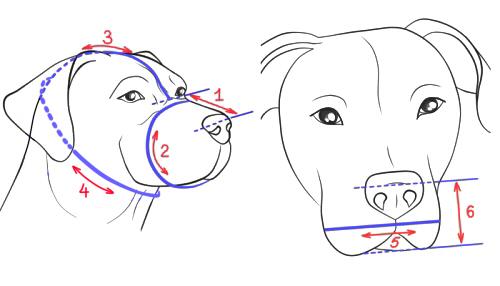 犬の測り方