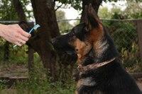 犬の歯磨きの仕方(ステップ2b)