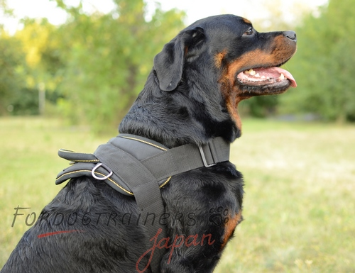 補助犬・ロットワイラー