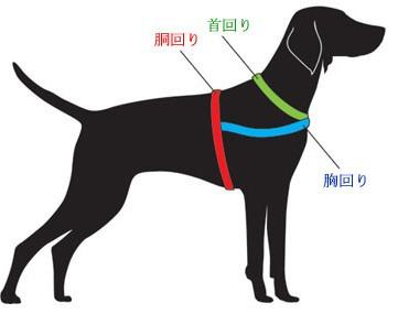 - Colorazione immagine di un cane ...