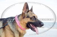 ジャーマン・シェパードの犬 散歩に最適な革製ピンクカラー 40 mm
